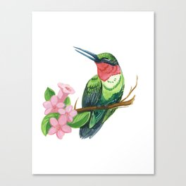 Summer Hummingbird Canvas Print