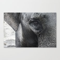 Elephant Eye Canvas Print