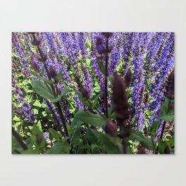 Through the Lavender Canvas Print