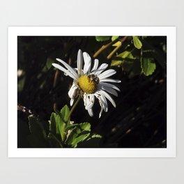 ambivalence daisy Art Print
