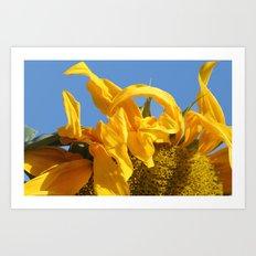 Sunny Morning Art Print