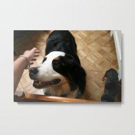 Pet Dog Metal Print