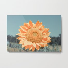 Flower Photography by dom Metal Print