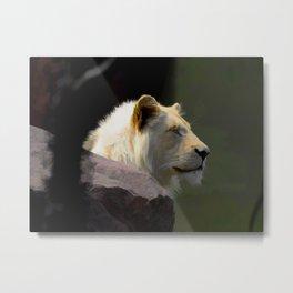 Regal White Lion Metal Print