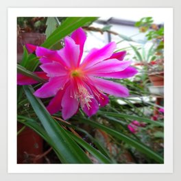 """BLOOMING FUCHSIA PINK """" ORCHID CACTUS"""" FLOWER Art Print"""