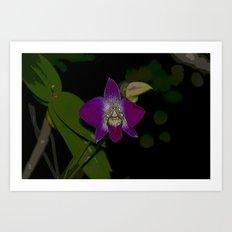 Purple Rain Orchid  Art Print
