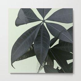 Pachira Aquatica #3 #foliage #decor #art #society6 Metal Print