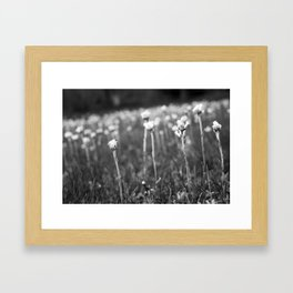 In My Back Yard Framed Art Print