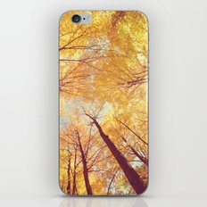 Fall Forest Skies iPhone & iPod Skin
