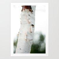 birch Art Prints featuring Birch by Katie Kirkland