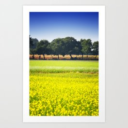 Mustard seed field with a row of trees and maize Art Print