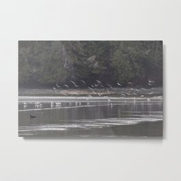 Otter with Gulls Metal Print