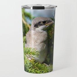 Fledgling Loggerhead Shrike Travel Mug