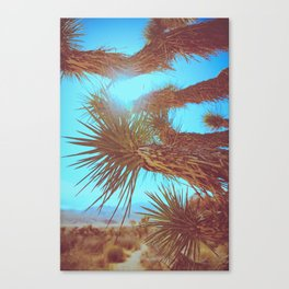 Joshua Tree Please Canvas Print