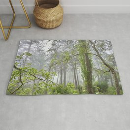 Foggy morning into the dream forest Rug