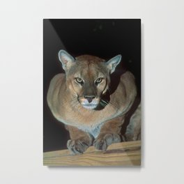 Survivor - Cougar Metal Print