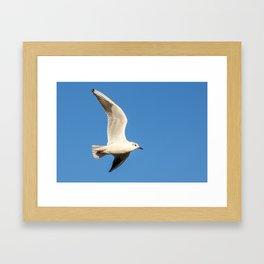 Seagull 2 Framed Art Print
