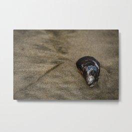 Mussel Metal Print