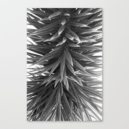 # 395 Canvas Print