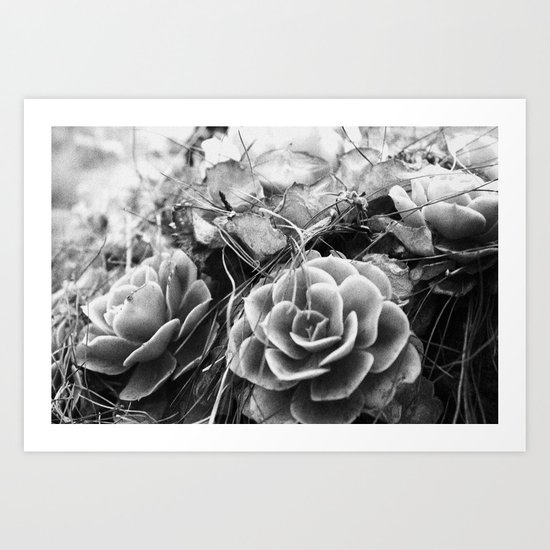 succulents soul Art Print