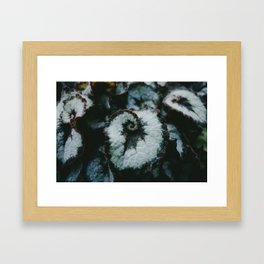 Escargot Framed Art Print