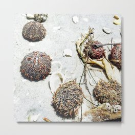 Sea Urchins in the sand, on the beach Metal Print