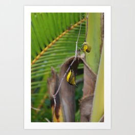 Sunbird Love Art Print