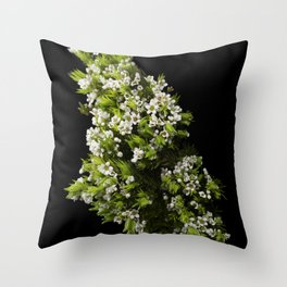 Diosma White Cape Flowers Throw Pillow