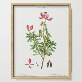 Ononis fruticosa from Traite des Arbres et Arbustes que lon cultive en France en pleine terre (1801- Serving Tray