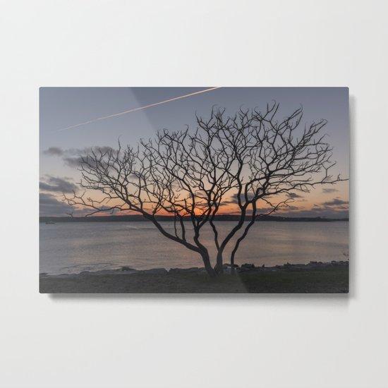 Sunset tree Niles Beach Metal Print
