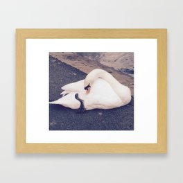 The Swan pt.2 Framed Art Print