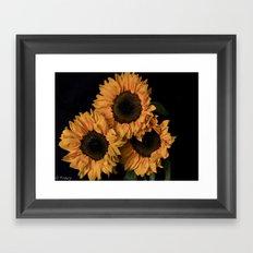 Sunflower Trio Framed Art Print