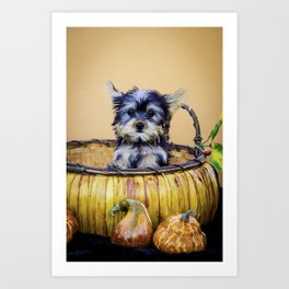 ae1ea3cef Tiny Yorkie Puppy Sits up in Pumpkin Basket with Orange Squash Art Print