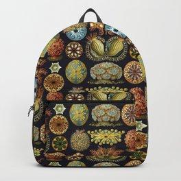 Ernst Haeckel Sea Squirts Ascidiae Black Background Backpack