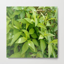 Greenery and leaf VII Metal Print