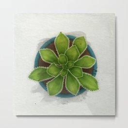 Succulent in pot Metal Print