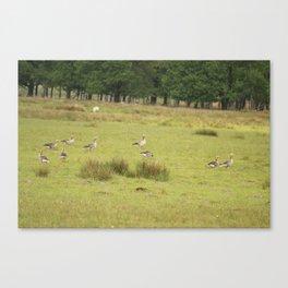 Flock Of Ducks Canvas Print