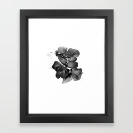 Black Geranium in White Framed Art Print
