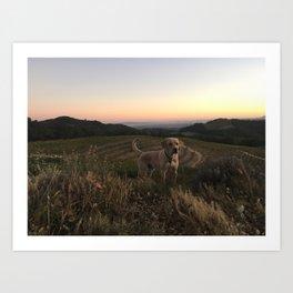 Vineyard Dog Art Print