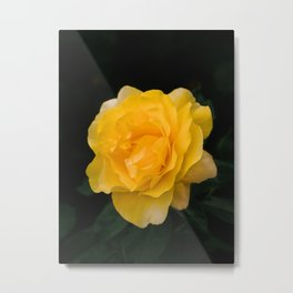 Happy Go Lucky yellow rose for flower enthusiast Metal Print