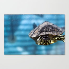 Mr. Chompers the Turtle Canvas Print