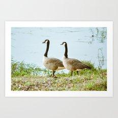 Gazing Geese Art Print