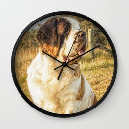 St Bernard dog in the sunset Wall Clock