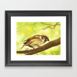 little sparrow Framed Art Print