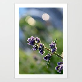 In Bloom 1: Purple Evening Art Print