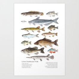 A Few Freshwater Fish Art Print