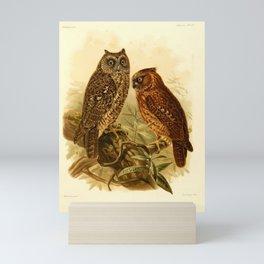 Sulawesi Siau or Sula Scops Owl Mini Art Print