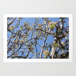 Branch Beauty Art Print