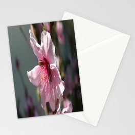 Close Up of Peach Tree Blossom Stationery Cards