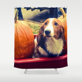 two pumpkins and an daschund Shower Curtain